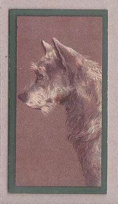 """Quality card from """"Dogs"""" no.22 Aberdeen Terrier by Taddy in 1900"""