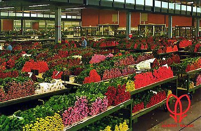 Pays-Bas - Aalsmeer - Cutflower Section (Marché aux Fleurs) 1987