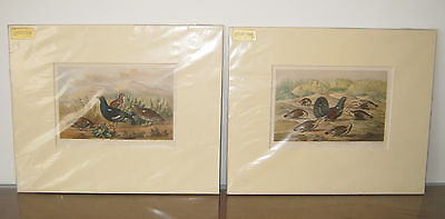 2 VICTORIAN MOUNTED PRINTS OF GAME BIRDS. PHEASANTS. DAY & SON LONDON. c. 1867
