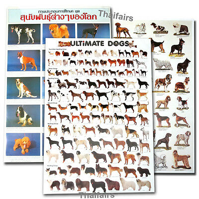 3x POSTER OF DOG BREED PUREBRED FOR EDUCATION MORE THAN 100 DOGS SPECIES POSTERS