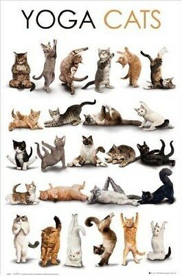 YOGA CATS! ~ 25 POSES ~ 24x36 Animal Poster ~ New/Rolled!