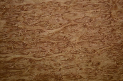 """Eucalyptus burr raw wood veneer 17.5"""" x 26""""  inches 1/42nd thick Exotic  r7629-8"""