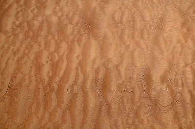 Pomelle Sapele raw wood veneer 18 x 46 inches. 1/42nd thick             a7659-49