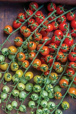 Vegetable Tomato Cherry Baby F1 5 Finest Seeds ** Uk Free P&P  **