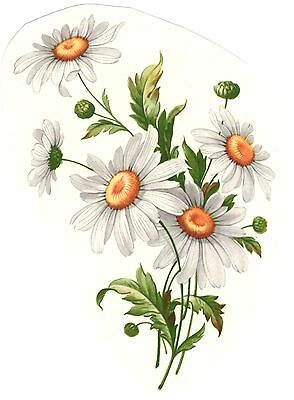 White Daisy Daisies Flower Select-A-Size Waterslide Ceramic Decals Xx