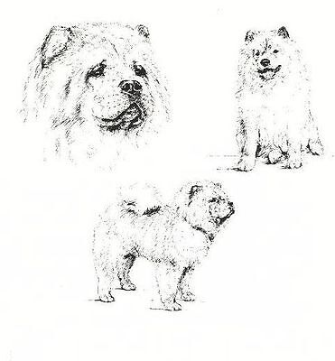 Chow Chow - 1963 Vintage Dog Print - Matted *