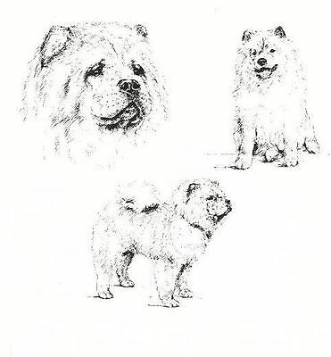 Chow Chow - 1963 Vintage Dog Print - Matted