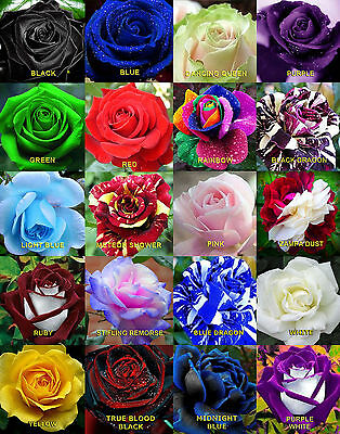 100 Rares Rainbow Rose Flower Seeds Your Lover Multi-color Plants Home Garden