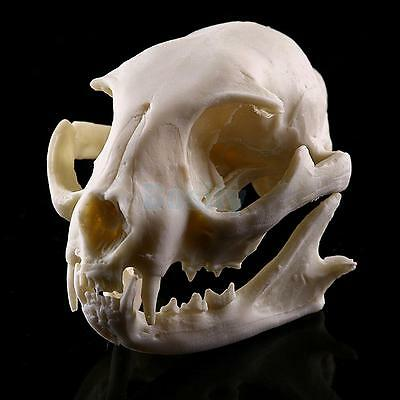 Resin Cat Skull Bone Statue Figurine Model Aquarium Fish Tank Ornament Decor