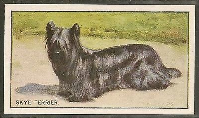 1926 UK George Vernon Stokes Dog Art Sanders Custard Jelly Card SKYE TERRIER