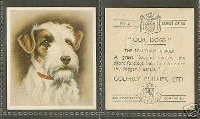 1939 UK Our Dogs Dog Art Godfrey Phillips Cigarette Card SEALYHAM TERRIER Adult