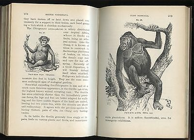 """""""ZOOLOGY"""": 1895: VICTORIAN ERA science book: (ILLUSTRATED): also charts & index"""