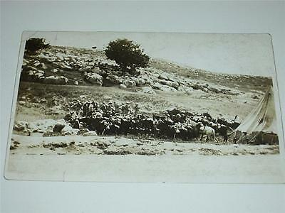 Ww1, Wwi  Military Rp Postcard - Group Of Soldiers & Horses In Camp!