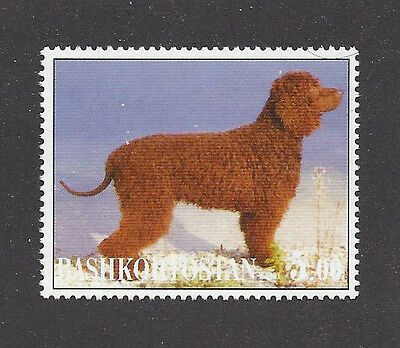 Dog Photo Body Study Postage Stamp IRISH WATER SPANIEL Bashkortostan 2001 MNH