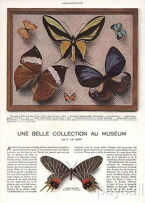 c1932 French Article Various Butterflies Museum Collection Fruehstorfer 8 pages