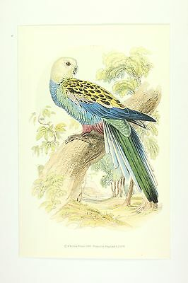 The Pale Headed Rosella Animal Bird Art - TOP QUALITY VINTAGE WALL ART