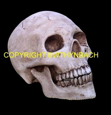 New Rubber Latex Mould Moulds Mold To Make Gothic Skull Halloween #1