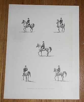1882 Antique Print of the Paces of the Horse after Muybridge [A]