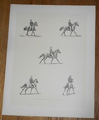 1882 Antique Print of the Paces of the Horse after Muybridge [B]
