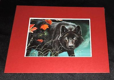 "Black Wolf Matted 8"" x 10""  Vintage Card"