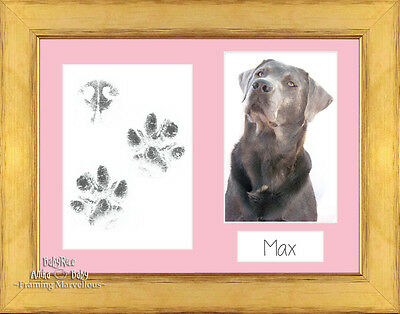 Pet Paw Prints Print Kit with Champagne Frame and Mount Options Gift Dog Cat