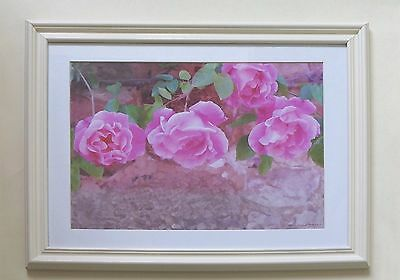 Fine Canvas Framed Photographic Print of Trailing Pink Roses