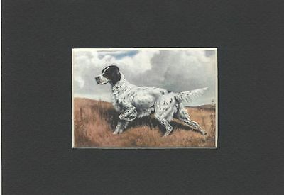 - English Setter Dog Art Print - Megargee CLEARANCE