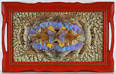 Decorative Wood w/Glass Serving Tray with Butterfly Wings - VINTAGE