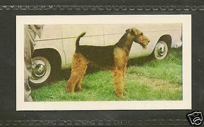 1961 UK Dog Photograph Full Body Art Trade Card Horniman's Tea AIREDALE TERRIER