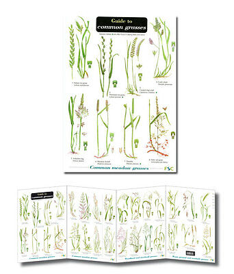 Field Guide to Common Grasses Laminated Identification Chart Poster