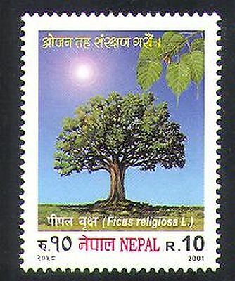 Nepal 2001 Pipal Tree/Trees/Plants/Nature/Fig/Food 1v (n37199)