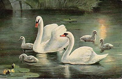 Vintage Artist Postcard.birds.swans And Signets.alfred Schonian.