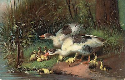 Vintage Artist Postcard.birds.geese And Chicks By The Riverside.
