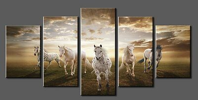 NEW - 5 Canvas Panel Wall Art -WHITE HORSES - Ride Cowgirl Rodeo Nature Wild