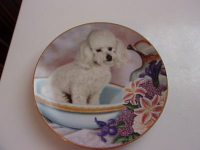 Bathing Beauty Poodles Limited Edition Danbury Mint Plate by Higgins Bond 8 in
