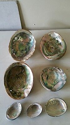 vintage abalone sea shell lot of 7 total 8 in 7.5 in old nice colors red jewelry