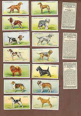 DOGS: Huge Collection of 1,450+ British WILLS Tobacco Cards (1937)