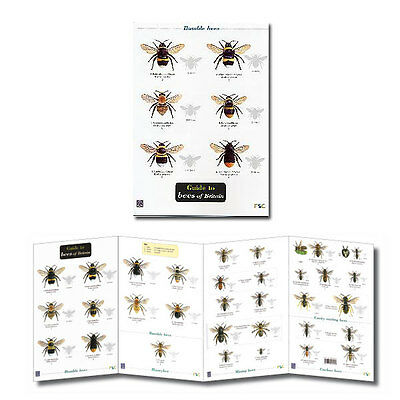 Guide to Bees of Britain Laminated Identification Chart Field Guide Poster