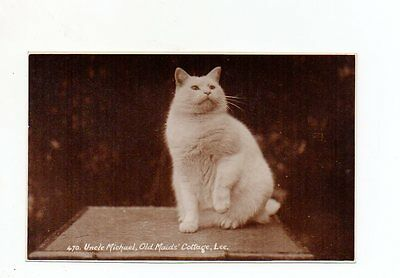 Old Postcard Uncle Michael Old Maids Cottage Lee Devon Cat