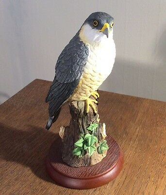 Border Fine Arts Sparrow Hawk Bird Figure A25056