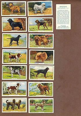 DOGS: Collection of 122 British GALLAHER Tobacco Cards (1938)