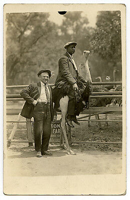 REAL PHOTO POSTCARD,  African American Man Riding an Ostrich! 1918-1930