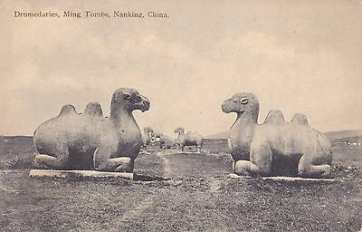 Old Vintage Postcard Dromedaries Ming Tombs Nanking China Burr Photo Co.