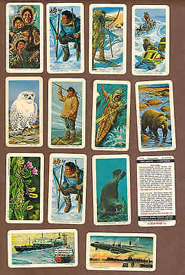 The ARCTIC: Collection of 73 Canadian BROOKE BOND Tea Cards (1973)