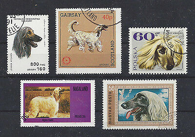 Dog Art Head & Body Study Portrait Postage Stamp Collection AFGHAN HOUND 5 x CTO