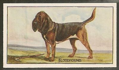 Rare 1926 UK George Vernon Stokes Dog Art Sanders Custard Jelly Card BLOODHOUND