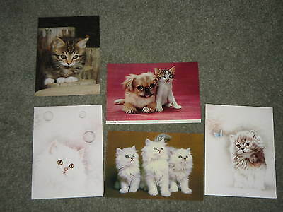 5 x Cat Postcards - Scratching Post Cat Charity Sale