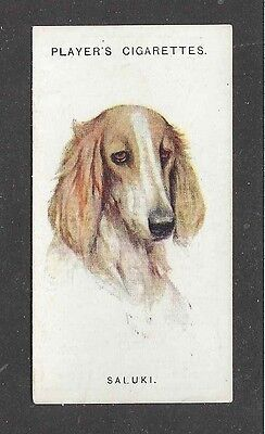 1929 UK Arthur Wardle Dog Art Head Study Player Cigarette Card Particolor SALUKI