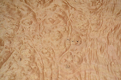 Chestnut Burl Raw Wood Veneer, 5 Sheets at 25 x 25 inches 1/42nd   r6838-24