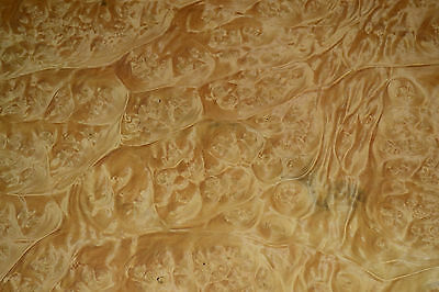 Myrtle Burl Raw Wood Veneer, 4 Sheets @ 15 x 19.5 inches 1/42nd       r6838-27